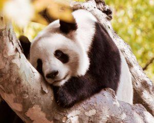 WWF-Brasil: plataforma de captação de doações